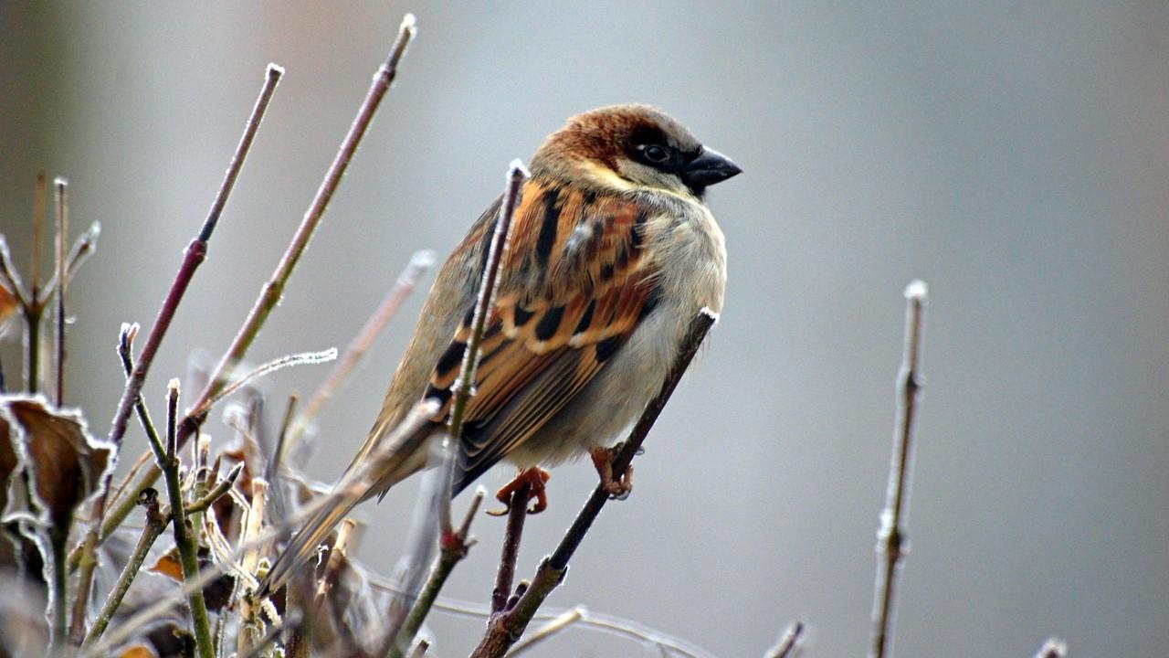 Birdwatch blog banner
